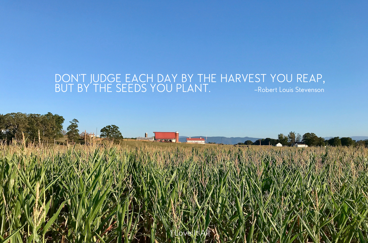 #harvest #quote #reap #quotes #robert louis stevenson ##photo #barn @cornfield