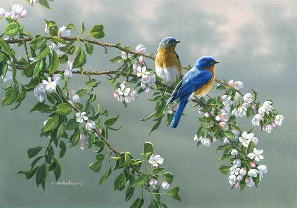 Pássaros pousado em uma Arvore
