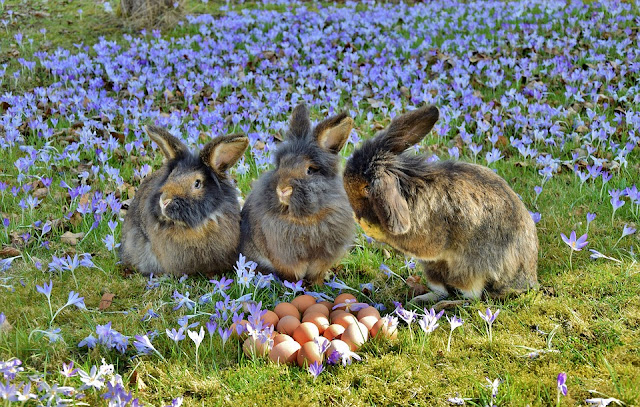 Easter bunnies in a field of flowers