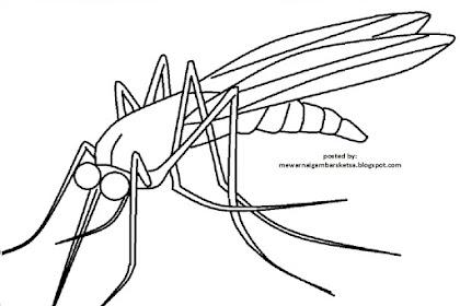 Gambar Nyamuk Untuk Mewarnai