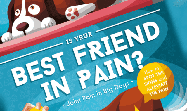 Is Your Best Friend In Pain?
