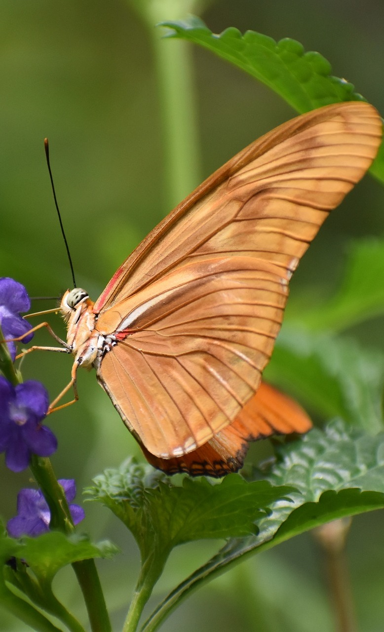 A beautiful brown butterfly.