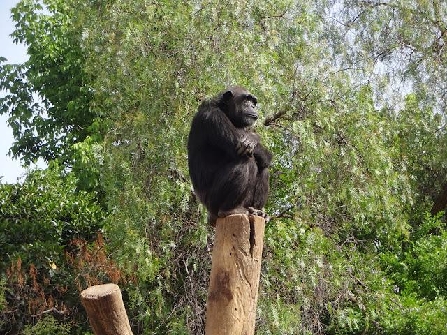 A Trip To The Zoo | Bioparc Fuengirola 9
