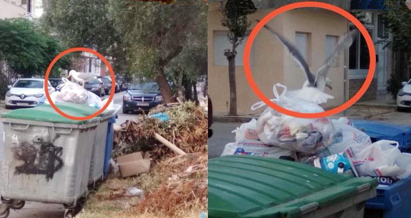ΑΝΑ.Σ.Α: Εκτός ελέγχου η κατάσταση με την αποκομιδή των απορριμμάτων στην Αλεξανδρούπολη