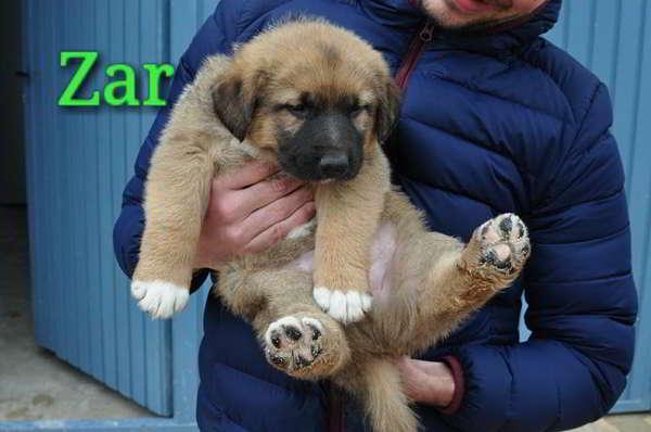 cachorro talla grande 5