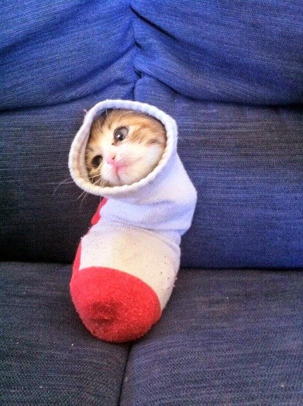 kucing selimutan kaus kaki