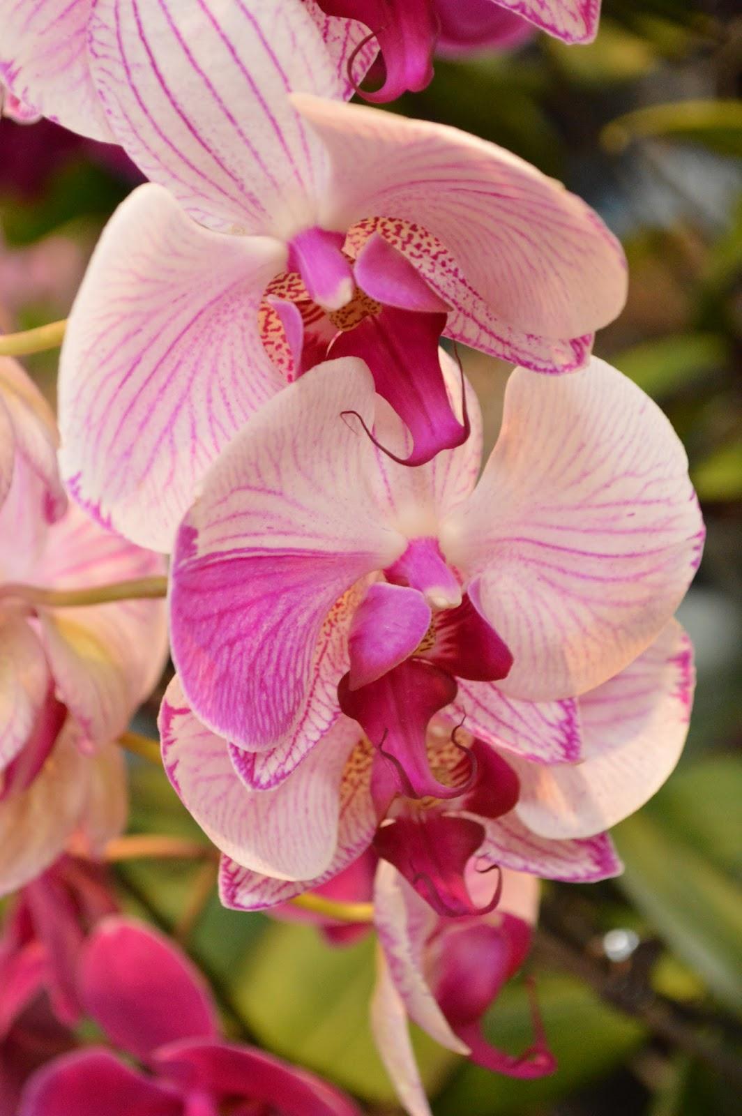 """Brown Sparrow Studio """"oooooo"""" orchids"""