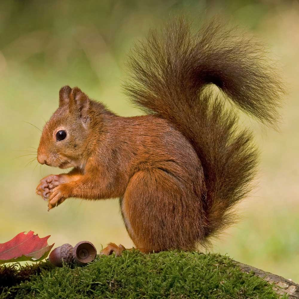 Top Herfst en bos in 't Konkelgoed: De dieren in het bos! #ZL59