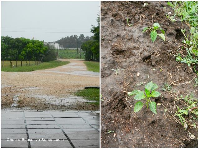 Parte es absorbida por las raíces de las plantas - Chacra Educativa Santa Lucía