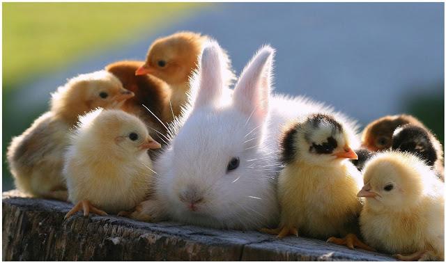 صور حيوانات صغيرة HD