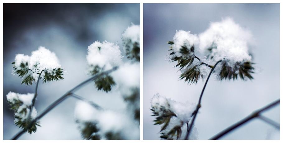 Blog + Fotografie by it's me! - Winter für einen Tag - Collage einer Schafherde und verschneitem Feld