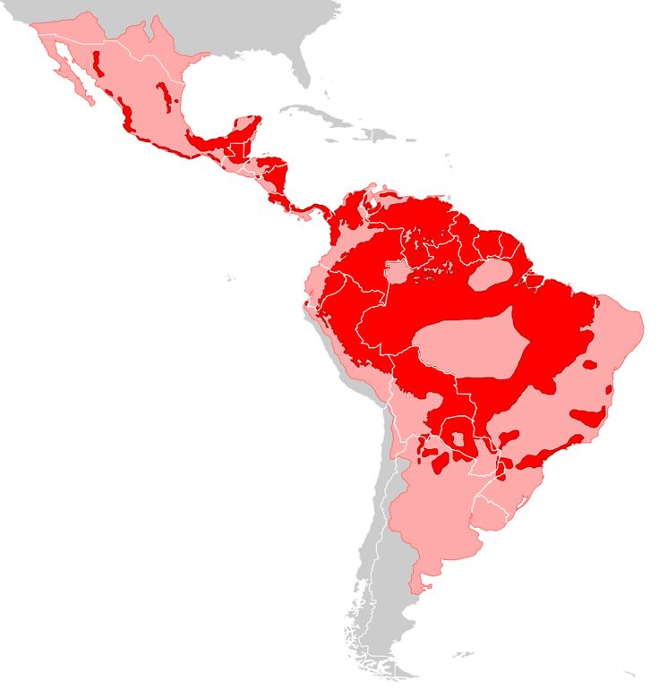 Jaguar ranges (former and present)