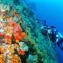 Tempat Diving Di Indonesia Dengan Terumbu Karang Yang Menakjubkan