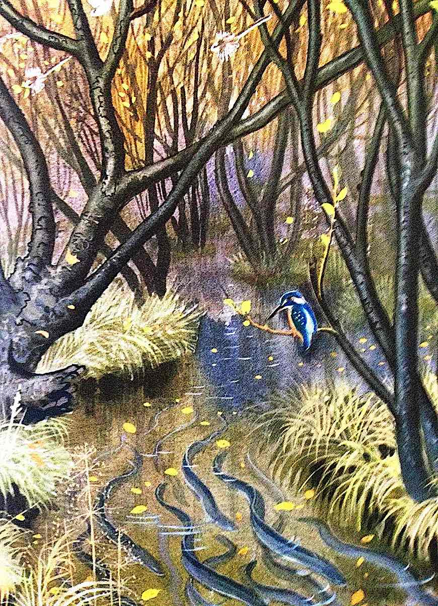 a Charles F. Tunnicliffe illustration of eels in a stream