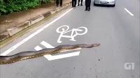 Polêmica Americano cria as filhas com cobra píton de quatro metros  Vídeo e fotos de uma cobra píton devorando um antílope inteiro  As 5 cobras mais venenosas do mundo