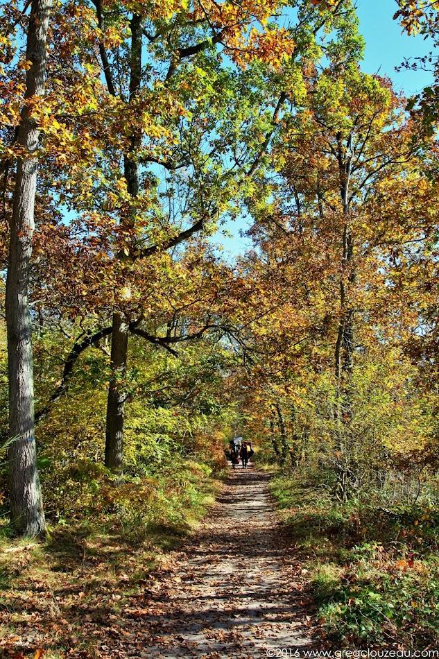 Début d'automne au Bas Cuvier, Fontainebleau, (C) 2016 Greg Clouzeau