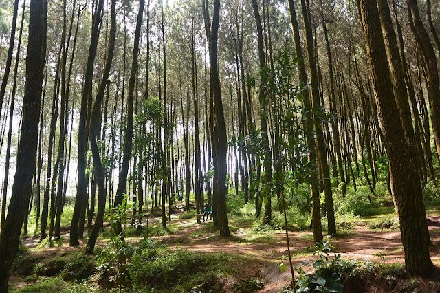 top selfie, pinusan, kragilan, top selfie pinusan, hutan pinus kragilan, hutan pinus magelang