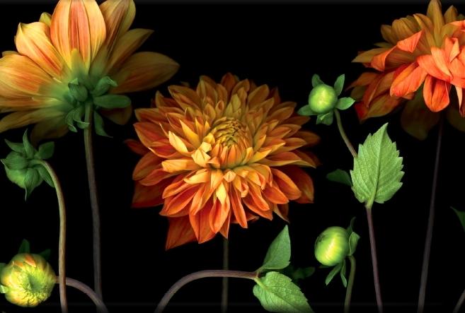 cuadros de flores modernas
