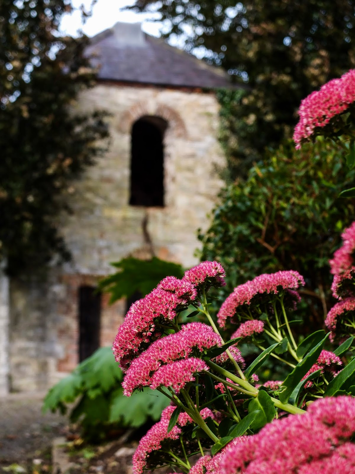 A stone building with pink flowers in front on the Cahir Castle grounds.