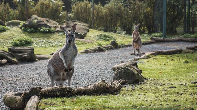 60 Koleksi Gambar Hewan Di Australia Gratis Terbaik
