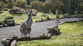 Gambar Hewan di Australia