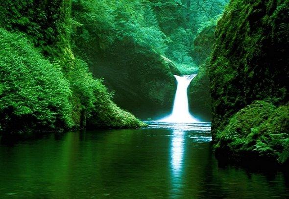 amazon rainforest south america - photo #11