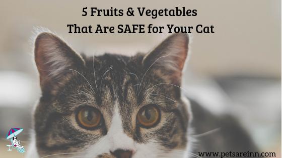 fruit vegetable cat