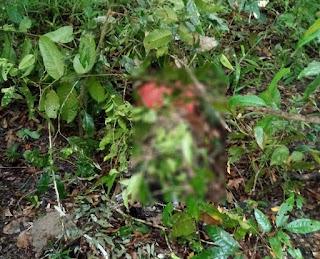 Corpo de mulher é encontrado em matagal na Paraíba