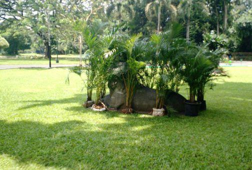Konyol, Patung di Istana Bogor 'menjaga auratnya' saat kunjungan Raja Salman