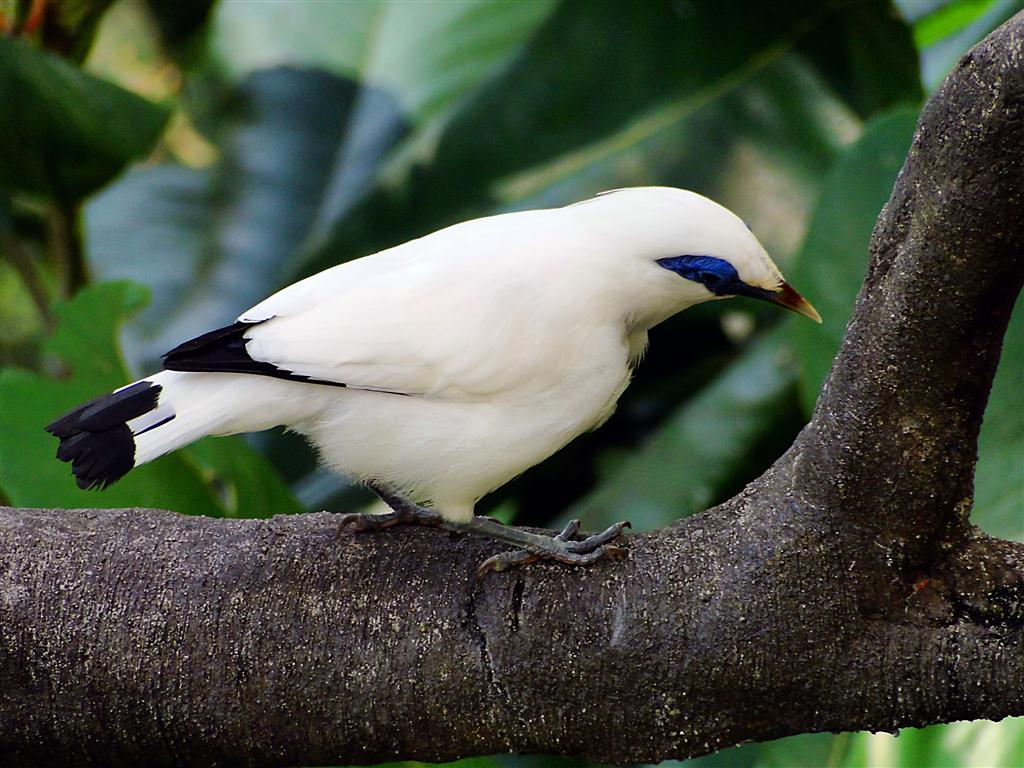 Bird Pictures and Information - photo#34