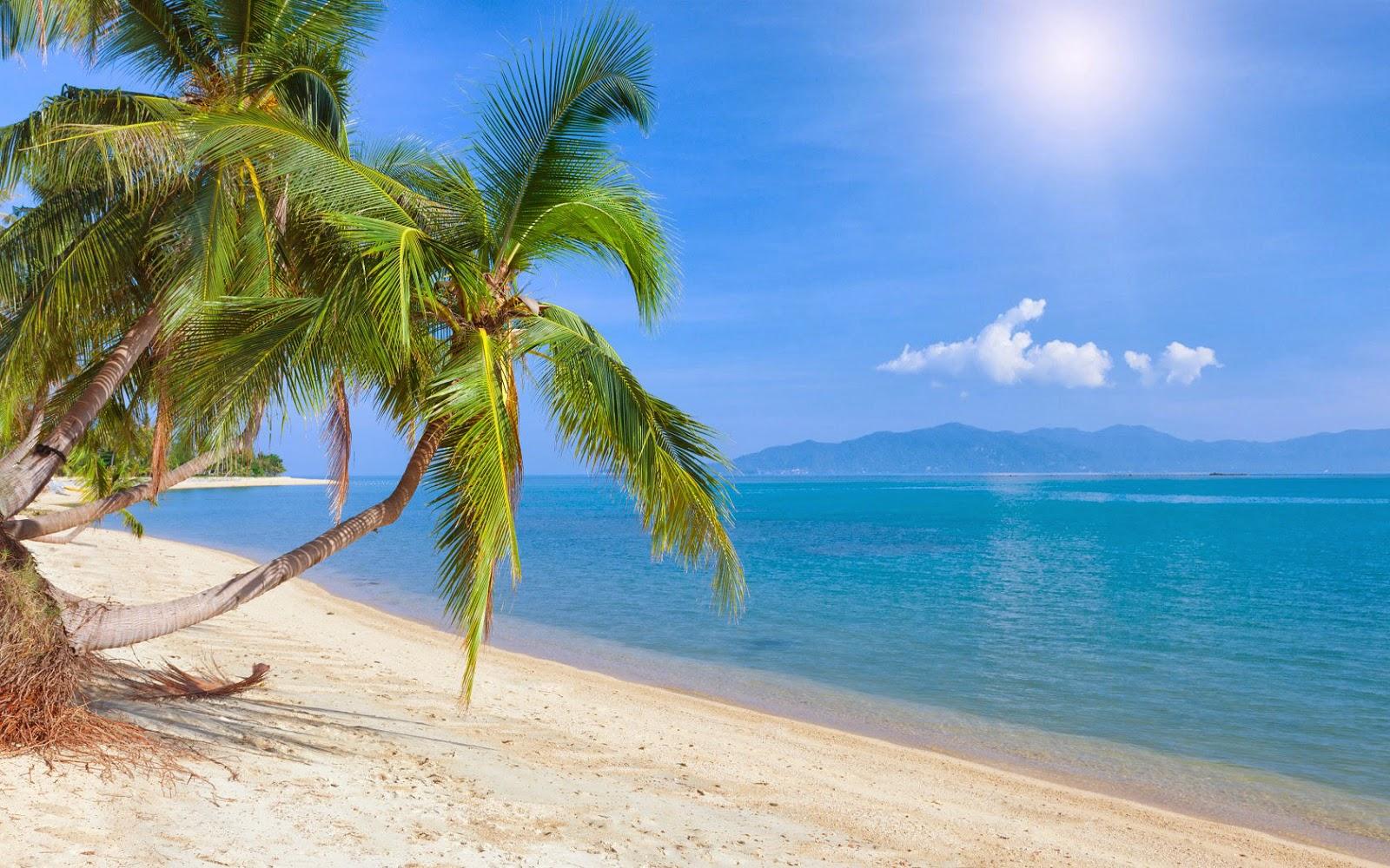 Mooie zomerse foto met strand, zee, zon en palmboom
