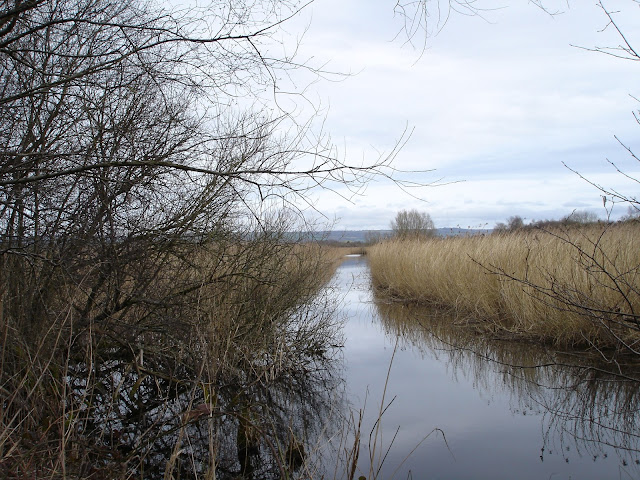 Somerset Levels Avalon Marshes