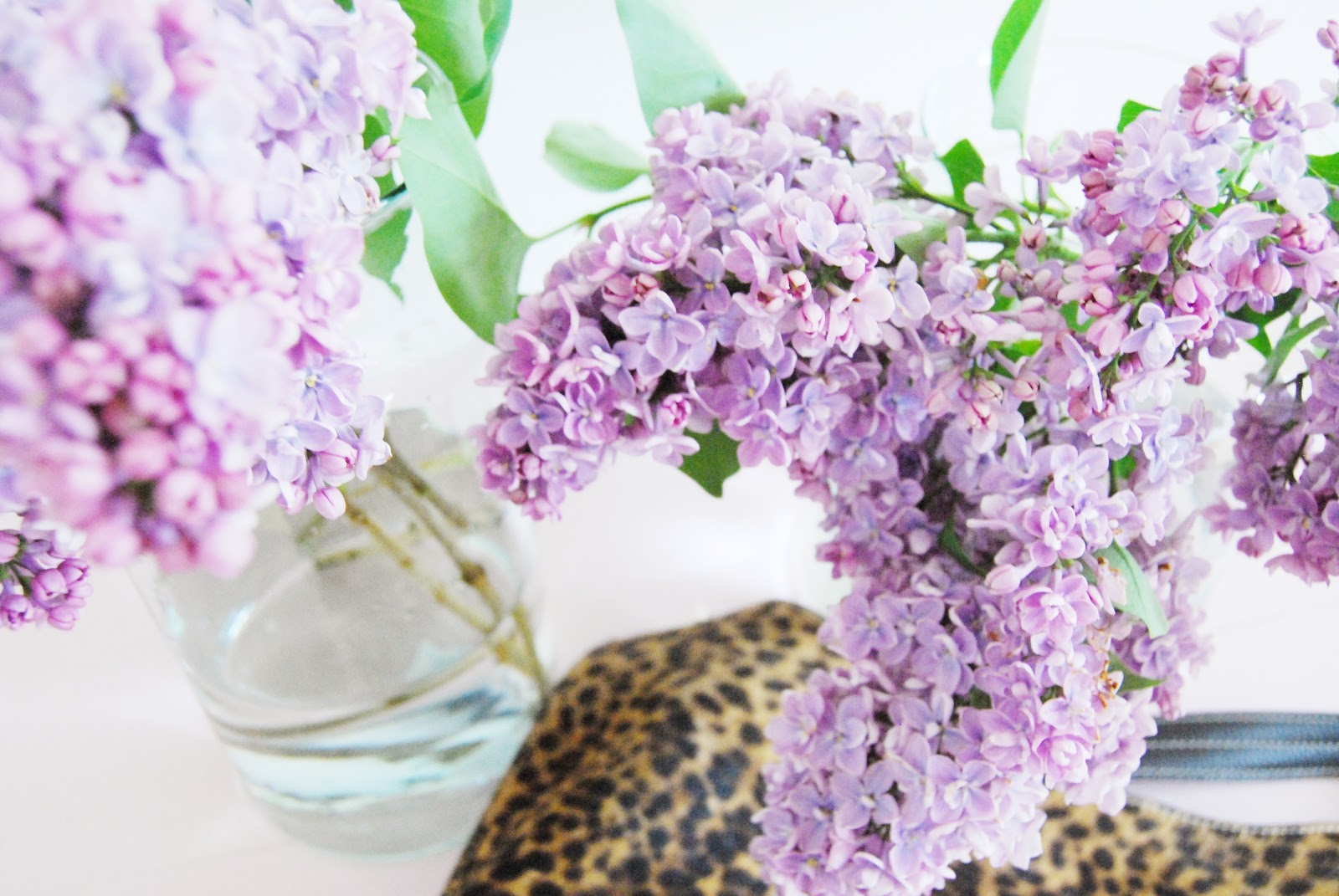 Lilacs Leopard Print A List Of Loves Brick Dust Glitter