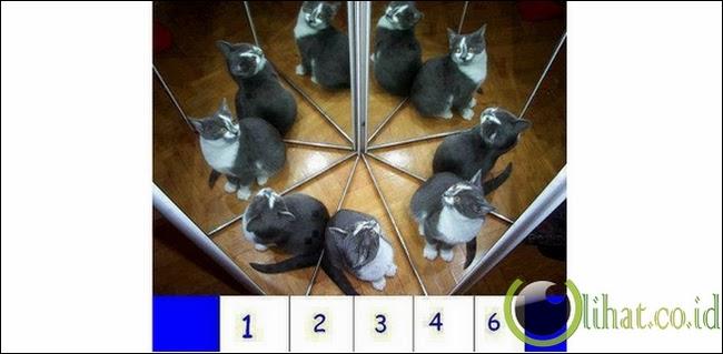 Ada Berapa Kucing?