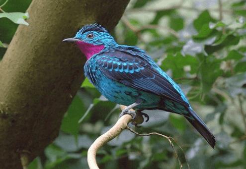 صور خلفيات جميلة للطيور لهاتفك وحاسوبك HD