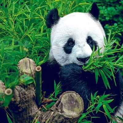 Gaudeix del Zoo Barcelona i descobreix animals i activitats tots els dies de l'any.