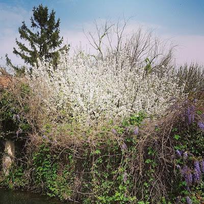 Provence Fleurs Flowers #flowfleurs2016 Printemps Petits bonheurs Pensée positive Count your blessings