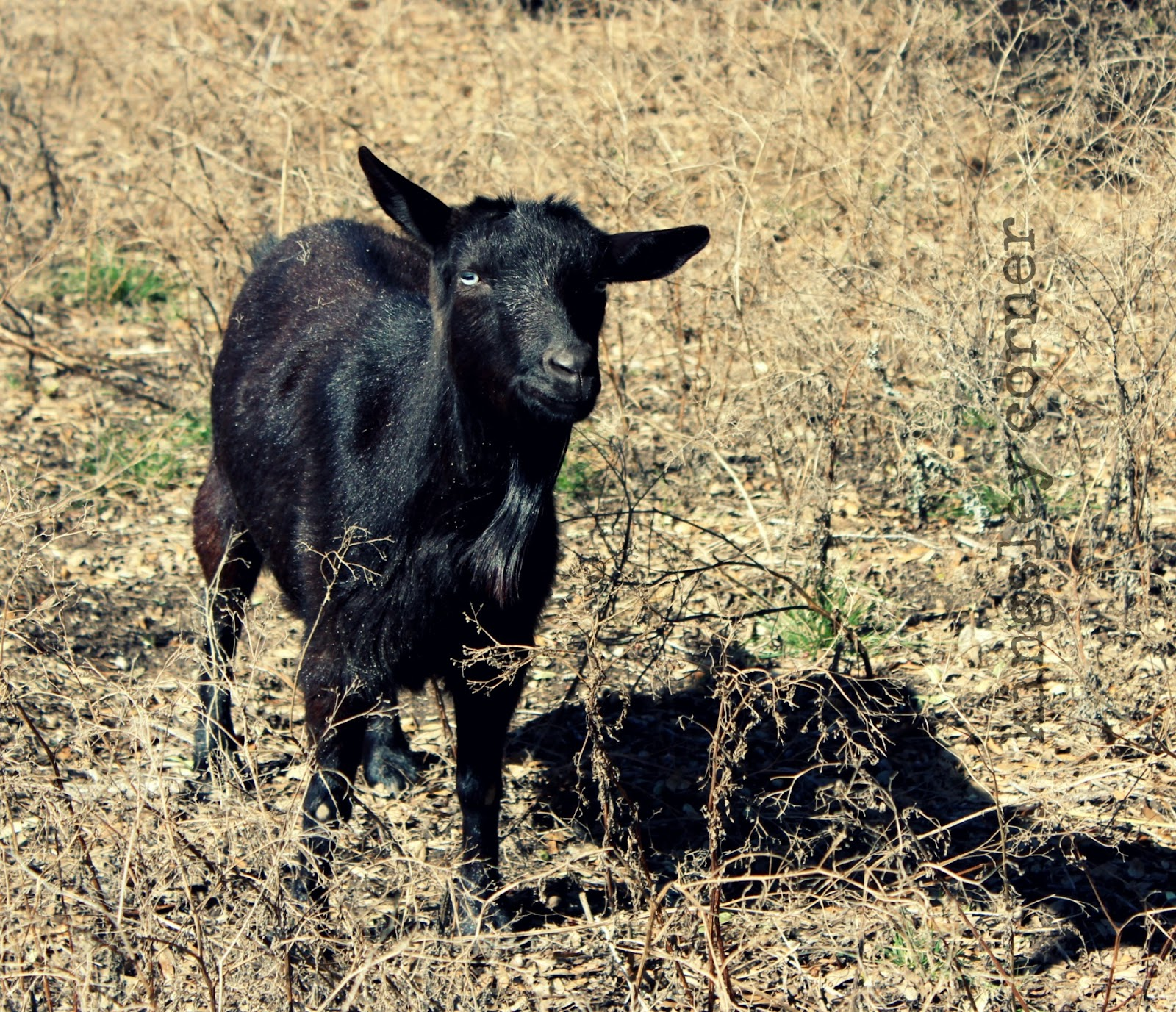 Kingsley corner our first livestock - Craigslist mississippi farm and garden ...