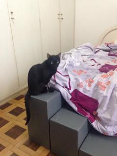 gatos subindo em camas