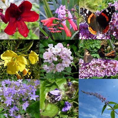 9 pictures from the August garden; scented geranium, crocosmia, red admiral on buddleia, evening primrose, cluster of pink roses, small tortoiseshells on buddleia, campanula flowers, bee in campanula flower, buddleia flower spike against a blue sky with jackdaws flying over