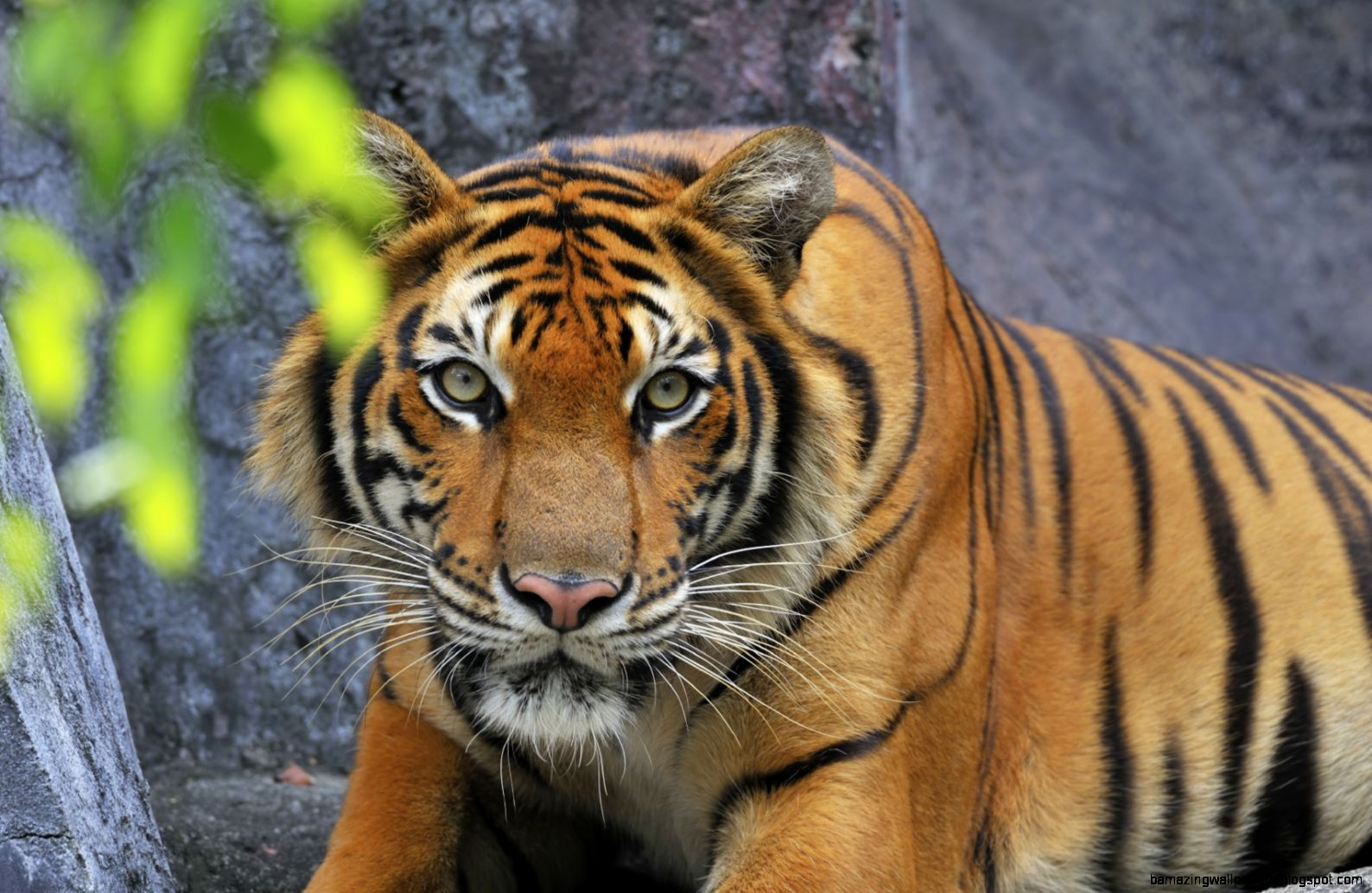 Real Jungle Animals | Wallpapers Gallery