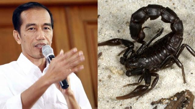 Presiden Bagi Tips Cepat Kaya dengan Jual Racun Kalajengking, Harganya Benar-benar Fantastis!