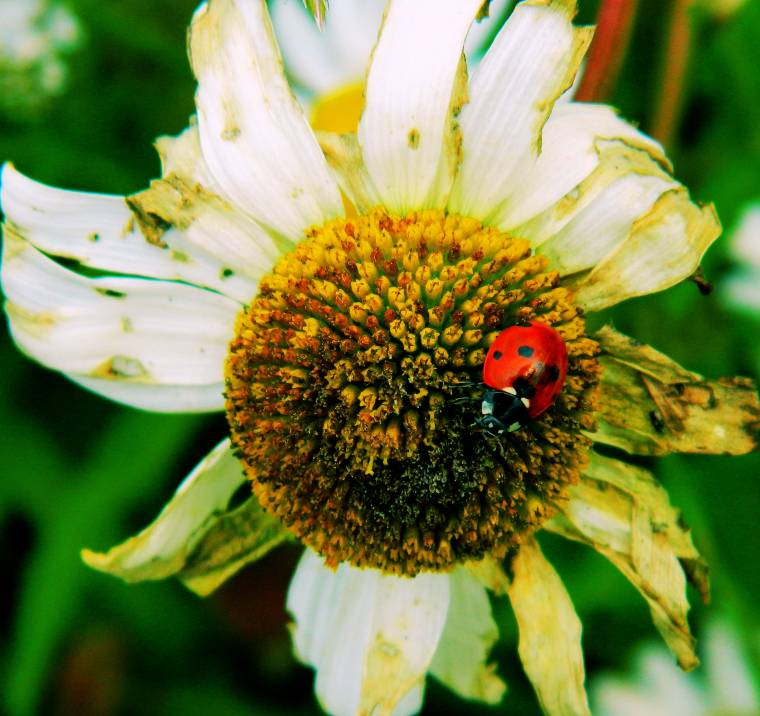 Daisy And The Ladybird: Such A Pretty Picture