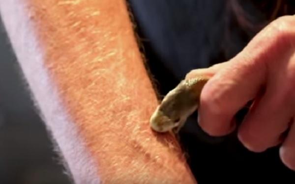 Homem que é imune a qualquer veneno de cobras (Imagem: Reprodução/Youtube)