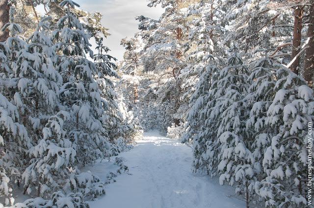 Parque Guadarrama ruta raquetas nieve libre sencilla Cotos Valdesquí