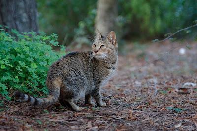 Daftar Nama Latin Kucing Yang Harus Diketahui