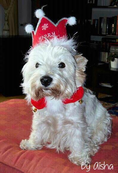 blog las cosinas de Aisha Feliz Navidad