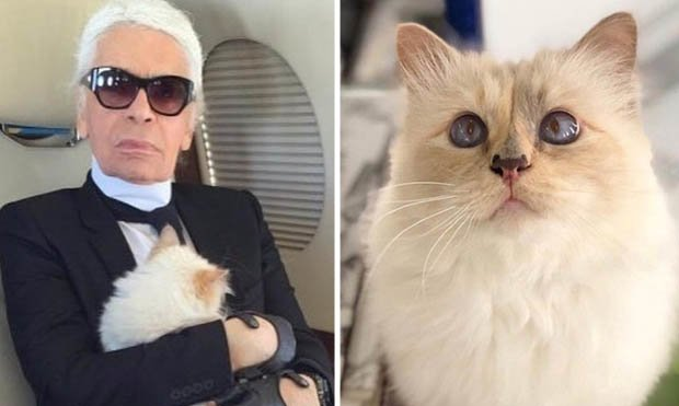 Η γάτα του Καρλ Λάγκερφελντ θα κληρονομήσει 150 εκατ. λίρες από την αμύθητη περιουσία του