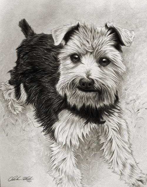 14-Charles-Black-Hyper-Realistic-Pencil-Drawings-of-Dogs-www-designstack-co