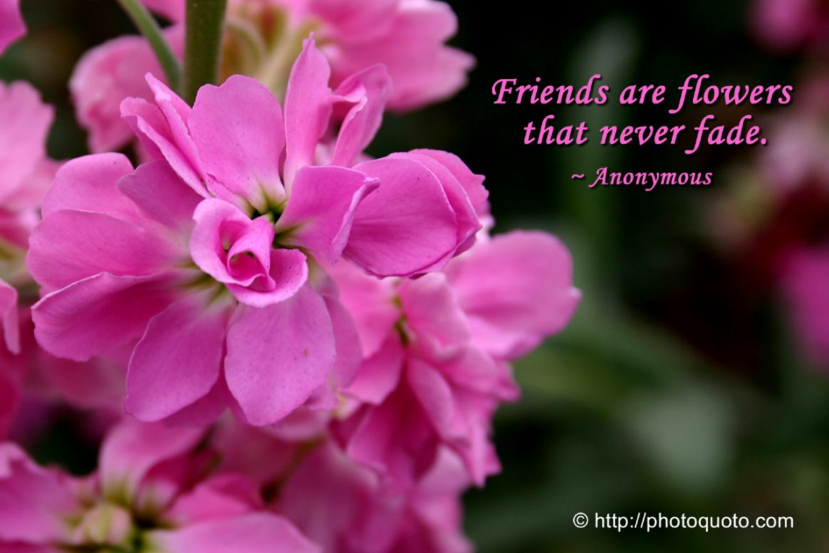 Friendship Quotes With Flowers Just Wallpapers